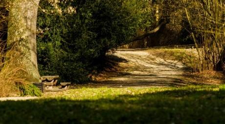 Arboretumul Simeria, un peisaj de basm