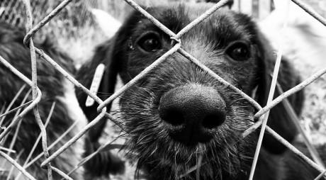 Campanie de sterilizare a animalelor fără stăpân la Brănișca