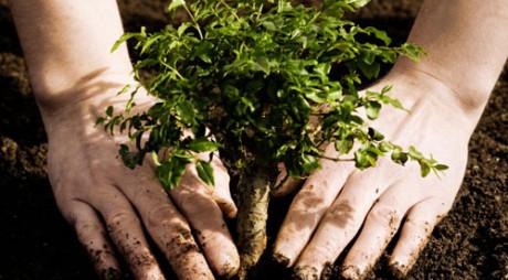 Plantează un pom pentru viitor!