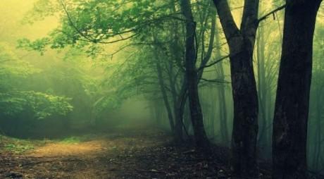 Pădure din Transilvania – TRIUNGHIUL BERMUDELOR