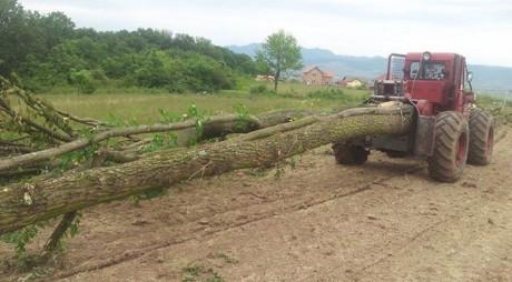 O firmă din Alba taie copacii din zona Bejan
