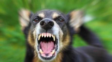 Copil muşcat de faţă de un câine în Hunedoara