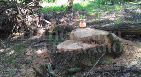 NU SE MAI FURĂ DIN CODRU? Traseul lemnului tăiat din păduri va fi supravegheat de autorități