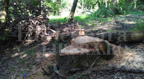 PROTEST la Deva pentru stoparea defrişărilor de pădure