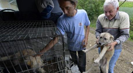SE POATE! Prima comună din România unde toți câinii sunt sterilizați și microcipați