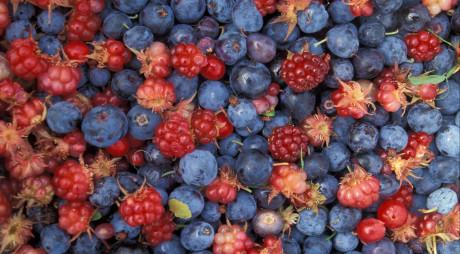 Peste 1,5 tone de fructe de pădure și ciuperci confiscate de polițiști