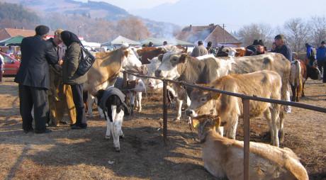 Târg de animale şi produse industriale, la JIEŢ
