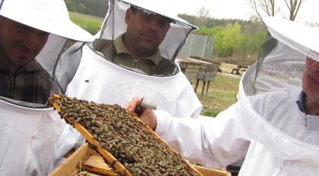 Producţia de miere din Hunedoara a scăzut cu 70% faţă de anii trecuţi