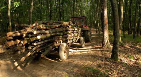 Hunedorean prins cu remorca neînmatriculată și plină cu lemne