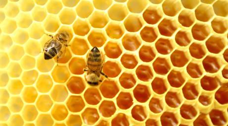EFECTE MIRACULOASE! Ce se întâmplă dacă bei apa caldă cu miere, pe stomacul gol