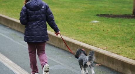 DEVA. Câinii cu stăpân vor avea un parc al lor