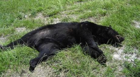 NEWS ALERT: Urs găsit MORT la marginea șoselei!