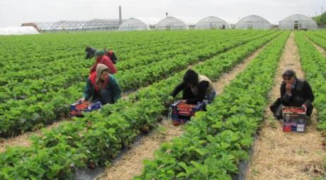 800 de locuri de muncă în Spania pentru români