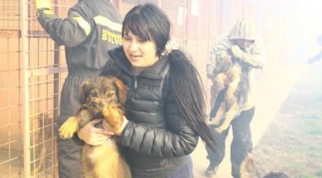 ŞOCANT! Zeci de câini, ARŞI DE VII la Timişoara