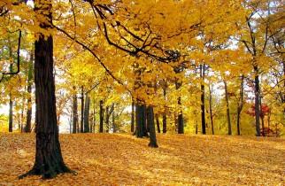 METEO pentru următoarele două săptămâni: Va fi răcoare până pe 1 octombrie, după care se va mai încălzi