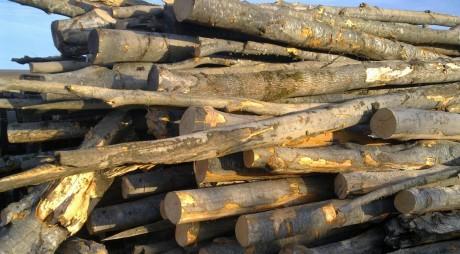 Un nou transport ilegal de lemne, descoperit de poliştii hunedoreni