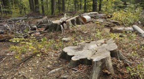 SCANDALOS! Amenzi pentru tăierile ilegale din Parcul Național Retezat