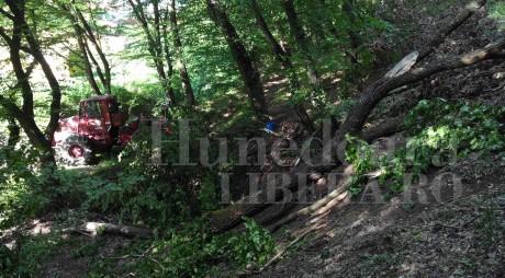 Judeţul Hunedoara, pe lista problemelor legate de fondul forestier