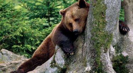 Bărbat atacat de un urs