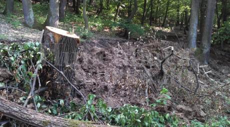 """""""E SINISTRU!"""" AU RETEZAT pădurea din jurul sanatoriului TBC din Brad"""