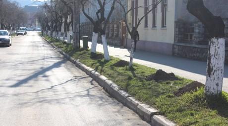 La Hunedoara au început plantările de primăvară