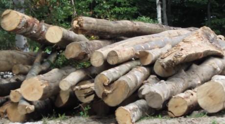 Argumentul HALUCINANT al Direcției Silvice pentru tăierea pădurii din jurul Sanatoriului Brad