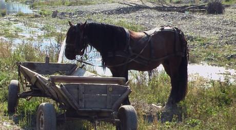 Bărbatul care şi-a târât femeia cu calul este judecat pentru omor