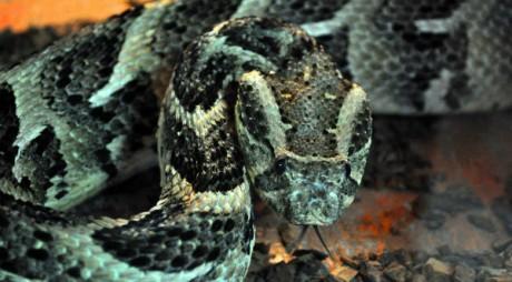 INEDIT. Expoziţie de reptile vii la muzeul din Deva