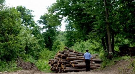 A fost lansată aplicația mobilă pentru raportarea tăierilor de păduri