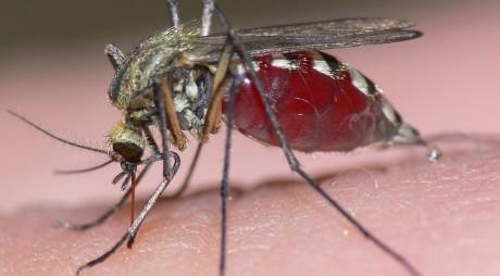 De ce unii oameni sunt muşcaţi mai des de ţânţari?