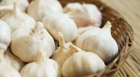 Stimulent financiar pentru cultivatorii de usturoi