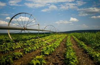 Vești bune pentru fermierii români