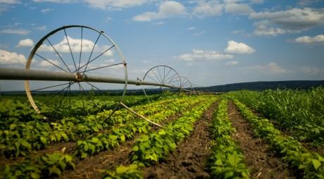 Credit pentru fermieri, impozit zero pe terenurile agricole lucrate
