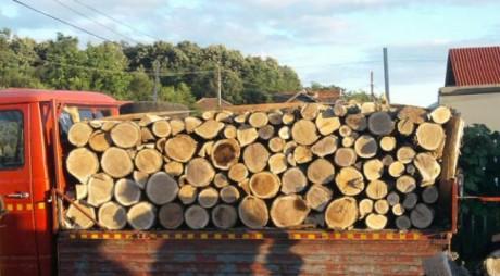 Amendat după ce a fost prins cu camionul plin de lemne