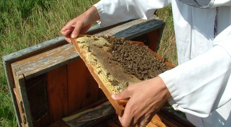 Producție de miere, la jumătate față de un an normal