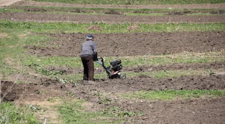 Studiu: 40% din terenurile agricole din România aparțin străinilor