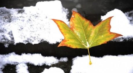 Cum va fi vremea în următoarele trei luni: Ultimele estimări ale meteorologilor