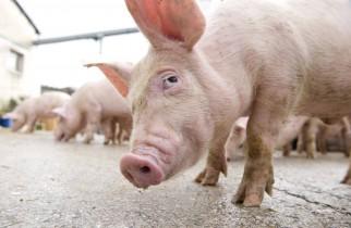 """APIA: Fermierii pot depune până la 31 iulie deconturile şi documentele justificative pentru măsura """"Bunăstarea animalelor"""""""