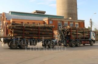 Noul radar al pădurilor intră în funcțiune din 1 noiembrie. Cum vor putea fi depistate tăierile ilegale de lemn