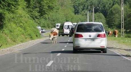 Drumul de la Sarmizegetusa va fi reparat pe cheltuiala constructorului