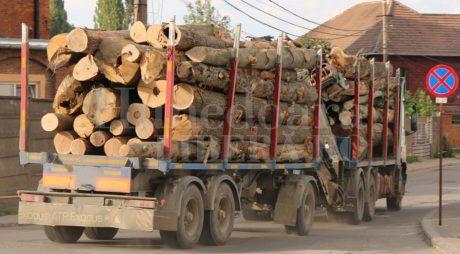 Tăieri lemn. Cât lemn se exploatează din pădurile României
