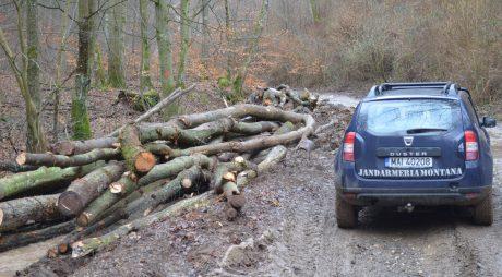 AMENZI și lemne confiscate de jandarmi