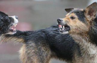 Femeie sfâșiată de o haită de câini! Unde a avut loc incidentul