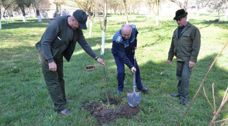 Polițiștii au plantat arbori în curtea IPJ Hunedoara