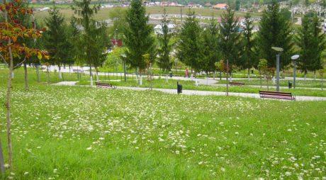 O căprioară din Parcul Bejan a fost găsită moartă