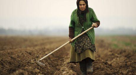 Recoltele au fost abandonate pe câmp din cauza lipsei forței de muncă