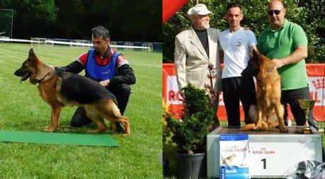 Lara, câine campion în Ungaria