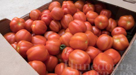 """Roşiile româneşti din """"Programul Tomata"""" sunt sigure pentru consum"""