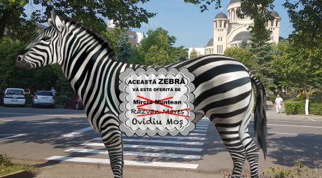 O zebră și 4 vânători (de voturi)