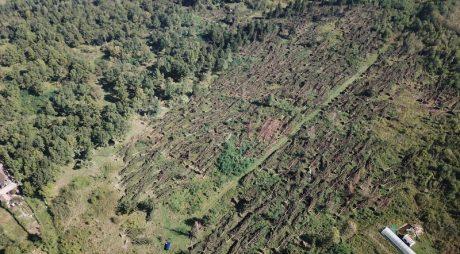VIDEO. Peste 700 de hectare de pădure, doborâte complet de furtuni